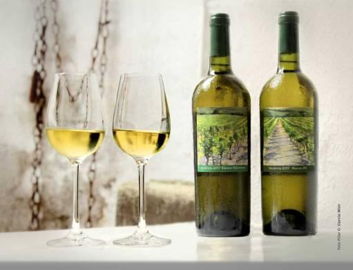 Vinos Blancos Vendimia 2017